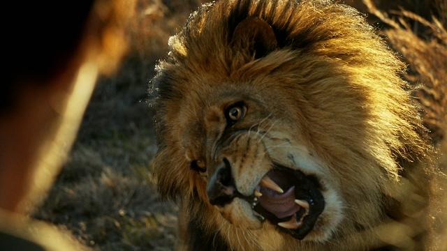 Zoo.S01E01.1080p.HDTV.X264-DIMENSION.mkv_snapshot_32.30_[2015.07.04_17.54.13]